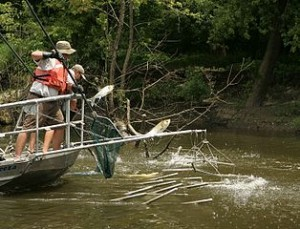 314px-Electrofishing_for_the_asian_carp_invasive_species