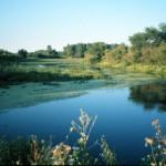 Detroit_River_International_Wildlife_Refuge